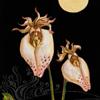 かるた・あえりあ<ヴォイニッチ植物園-Ⅰ> CHARTA AERIA<Voynich Garden – I>